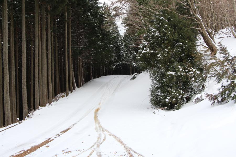 雪の林道谷山線