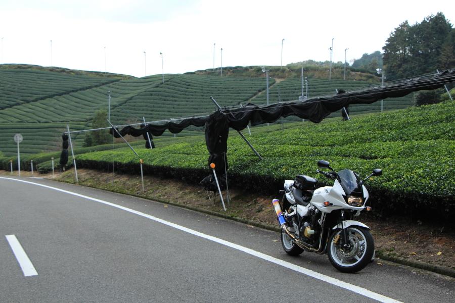 宇治の茶畑とCB1300SB