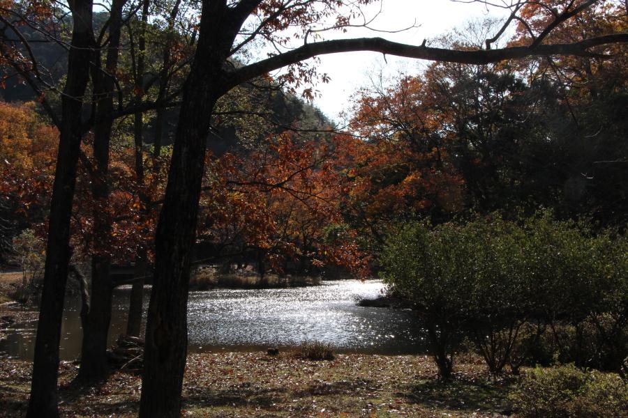 秋のしゃくなげ渓