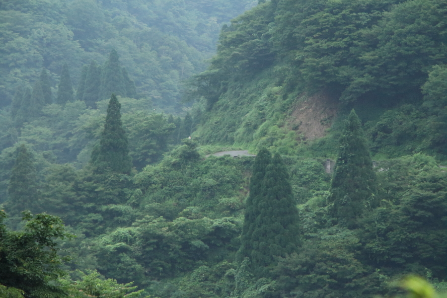 早朝の冠山林道