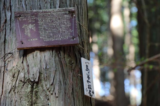 杉の木に掛けられた札