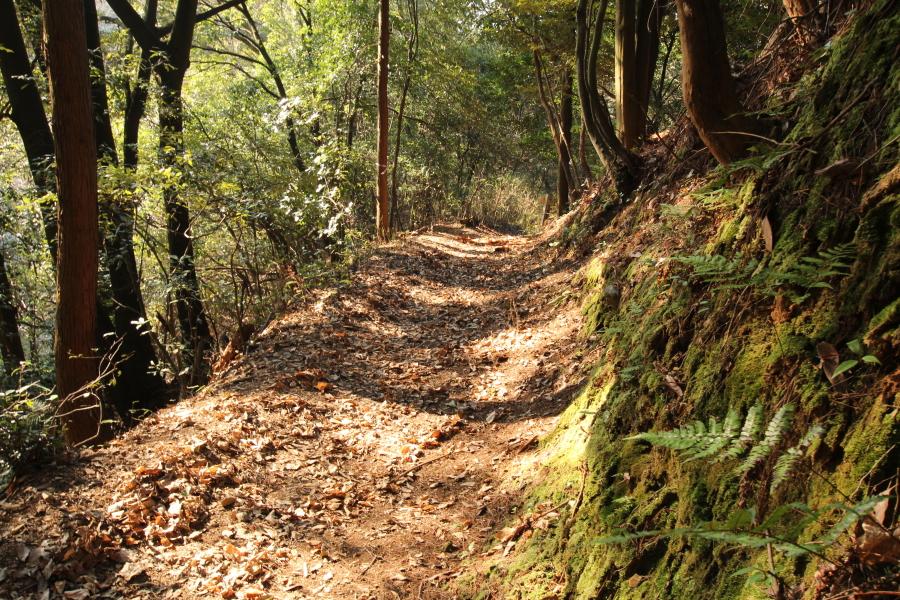 供水峠の登山道