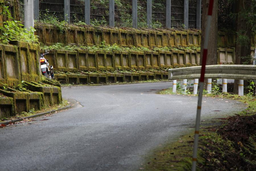 前ヶ畑峠の苔の道