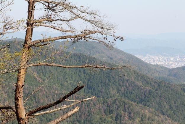 松尾峠から見た風景