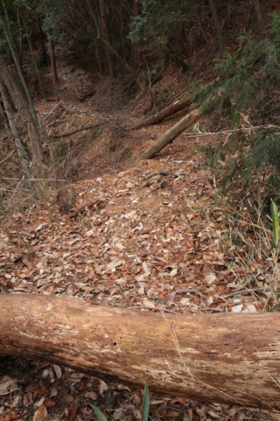 旧長坂峠、眼前に倒木が出現する
