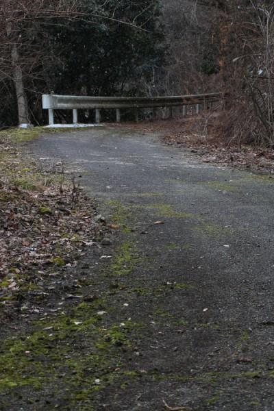 旧国道173号の苔