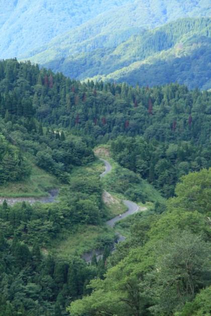 鳥越峠の峠道の光景