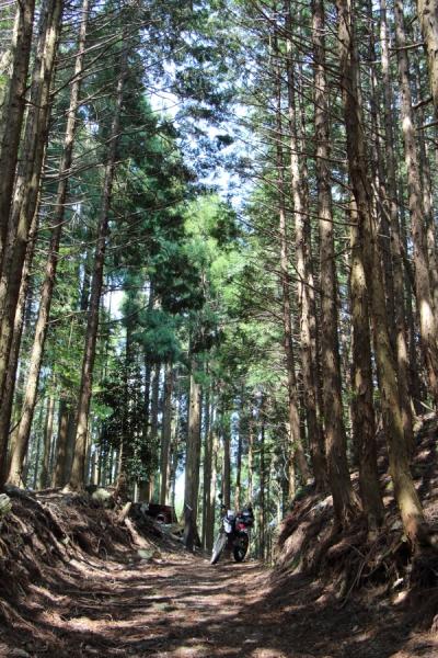 万華鏡のような林間