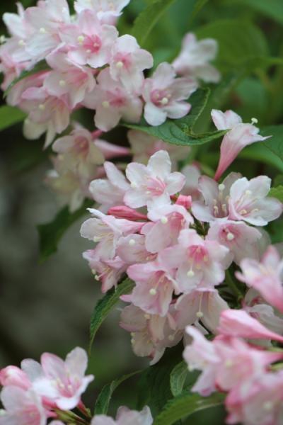 水坂峠の花