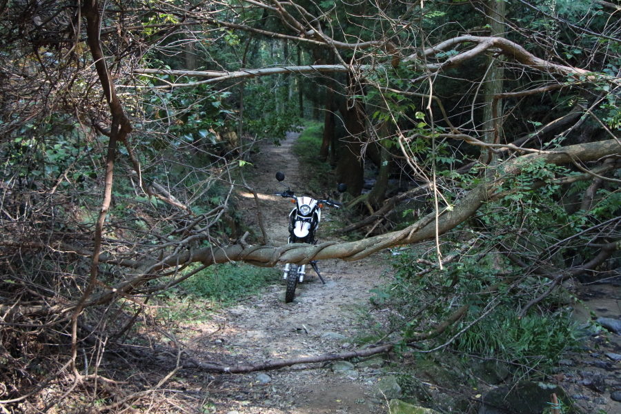 鳴川峠の終着点