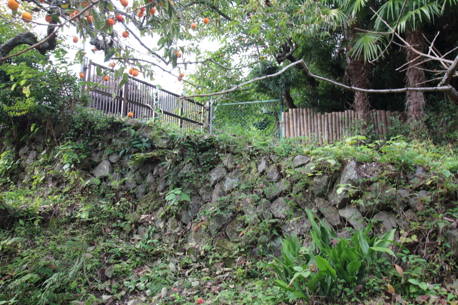 石垣に根付く雑草