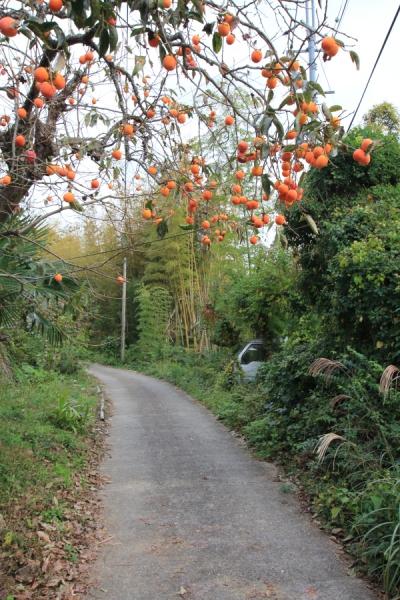 柿の生る里山の道