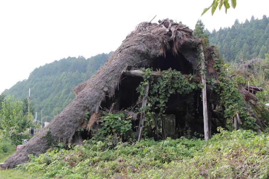 崩れ落ちた茅葺屋根の民家