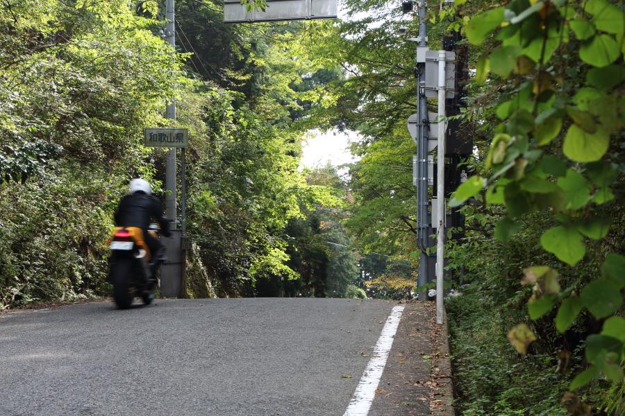 大阪府側から見た鍋谷峠のピーク