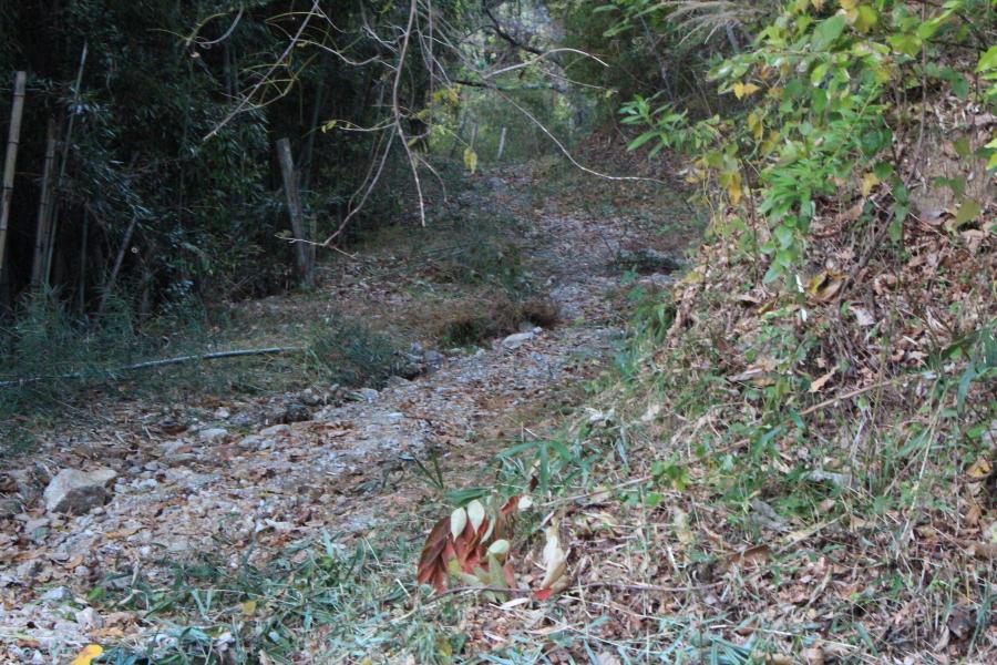 雨水に浸食されて溝が