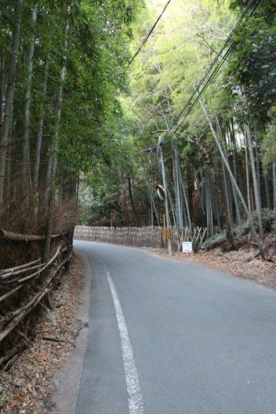 達磨堂円福禅寺に沿う竹林の道