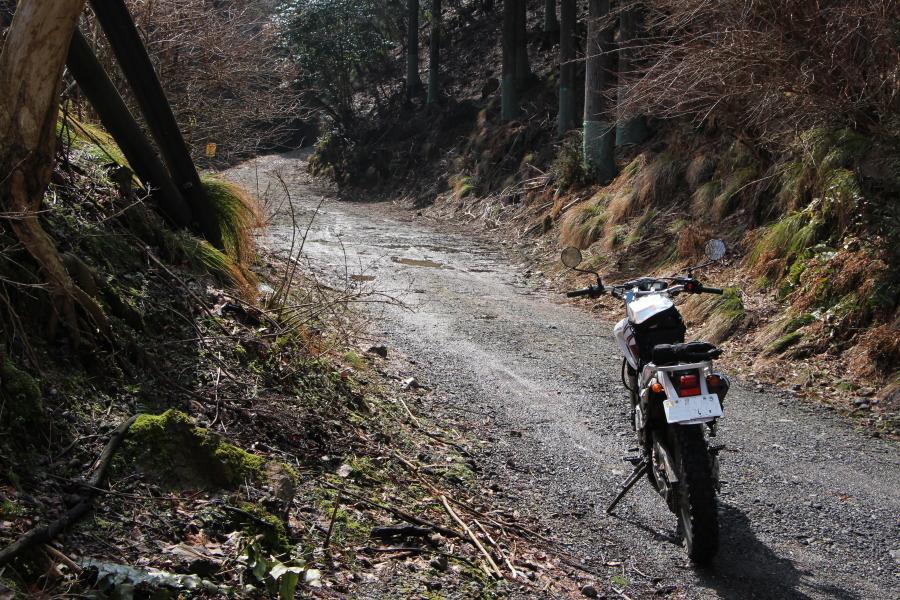 石山トンネル横の林道