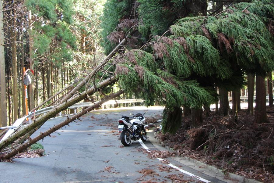 旧国道372号の倒木