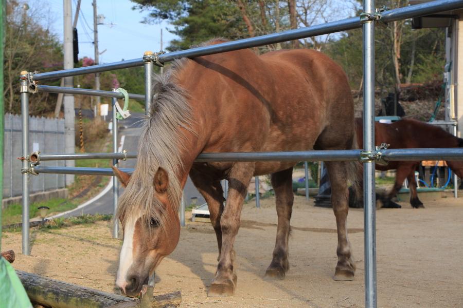 馬に道を尋ねる