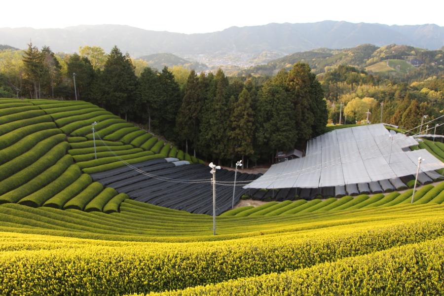 京都和束の茶源郷