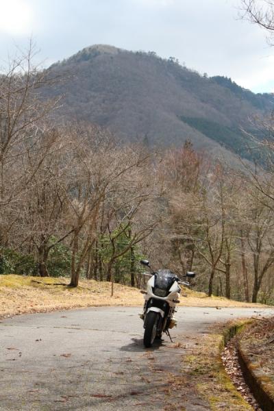 弓谷峠から見た八ヶ尾山