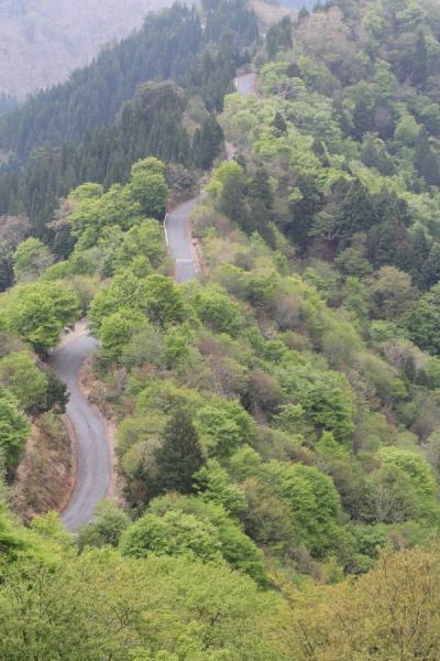 尾根を通す小入谷林道