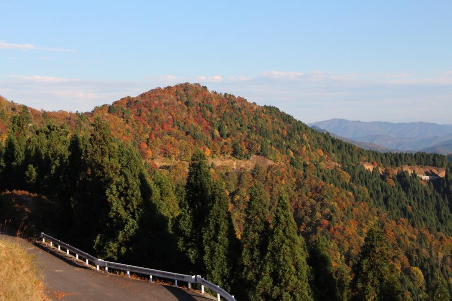 秋の滋賀県側の林道小入谷線