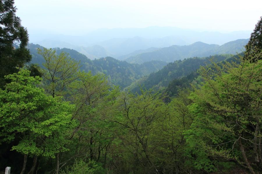 林道上根来線からの眺望