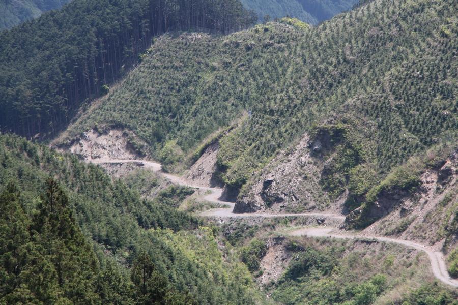 高見峠の林道