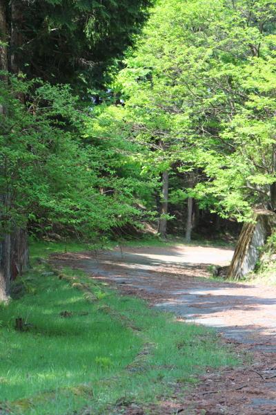 高見峠の奈良県側の旧道
