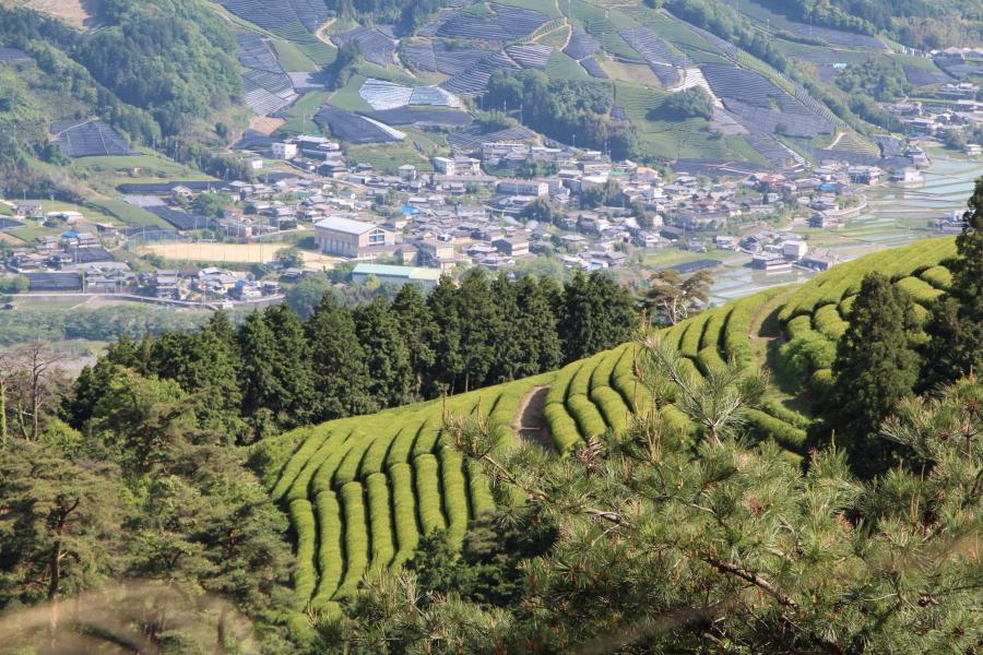「茶源郷」京都和束