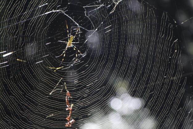 平石峠街道の蜘蛛の巣
