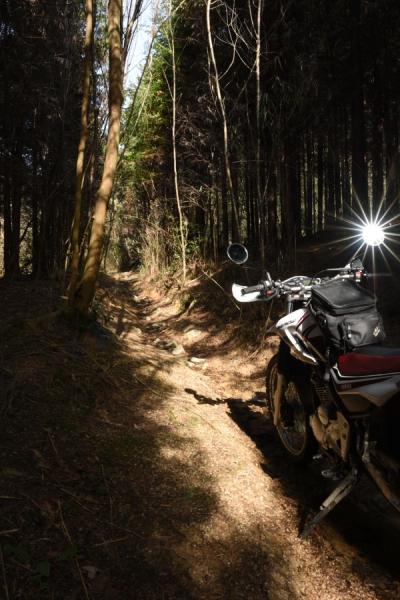 林道を走るセロー