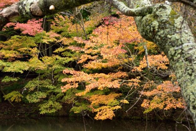 秋の紅葉の見所